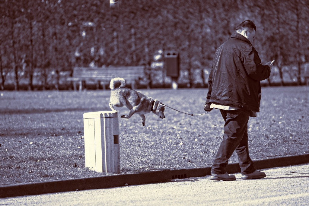 black and white photo of man walking dog while looking at his phone