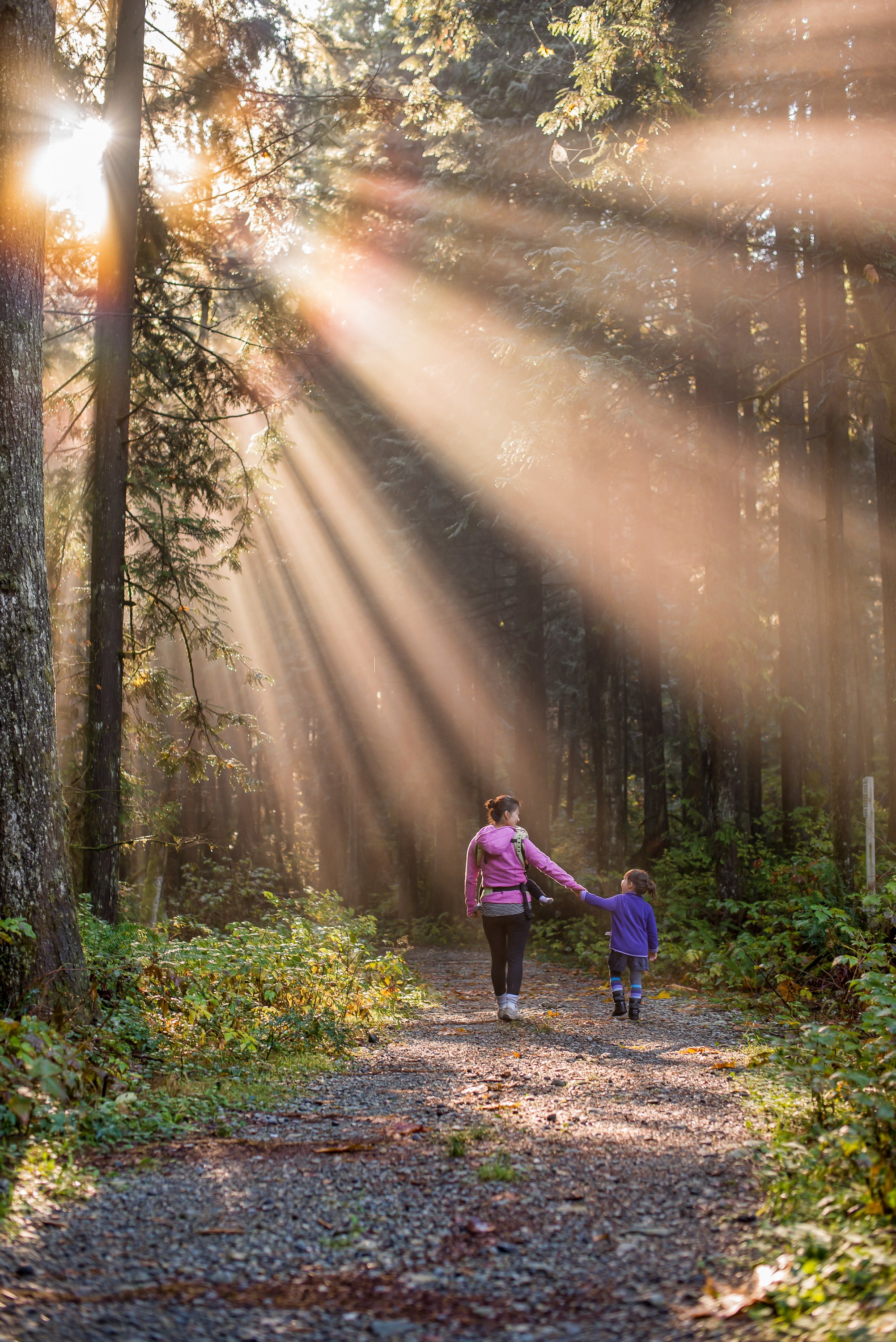 Mom, baby in carrier, and daughter holding hands walking away on a forest path with sunlight streaming from above